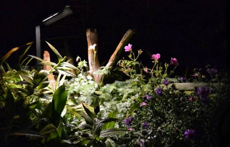Low voltage LED - landscape lighting designer - West Vancouver homes